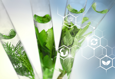 The Role of Biotechnology in a Sustainable Future