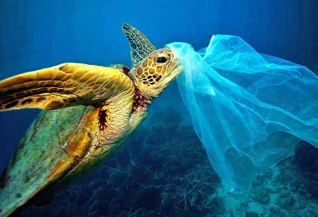 Five Steps to Tackle the Plastic Crisis